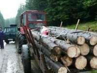 Doi bărbați din Breb și unul din Bistra, amendați pentru transport ilegal de material lemnos