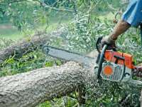 Doi bărbaţi din Poienile de sub Munte cercetaţi pentru tăiere ilegală şi furt de arbori