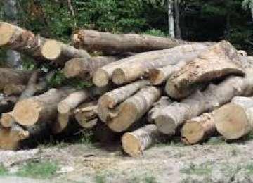 Doi borșeni au fost amendați pentru transport ilegal de material lemnos