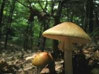 Doi copii şi părinţii acestora, în stare gravă după ce s-au intoxicat cu ciuperci