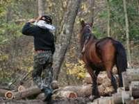 Doi tineri din Maramureș, cercetaţi pentru comiterea de infracţiuni silvice