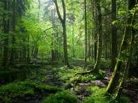 Două păduri din Maramureş au fost nominalizate pentru a intra în patrimoniul mondial UNESCO