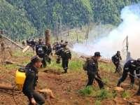 După patru zile, incendiul care a mistuit munții Borșei a fost stins cu succes