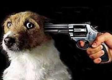 E OFICIAL! Câinii neadoptaţi în 14 zile vor fi eutanasiaţi