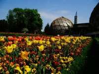Explozie de culoare la Grădina Botanică Jibou - 30.000 de exemplare de lalele au înflorit