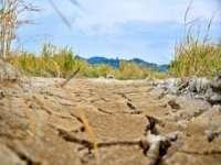 Fermierii afectați de secetă ar putea fi despăgubiți cel mai probabil printr-o schemă de ajutor de stat