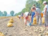 Fermierii mari și mici cer includerea cartofului pe lista alimentelor cu TVA redus la 9%