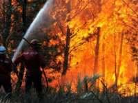 FOC: Incendiu de pădure în Borșa