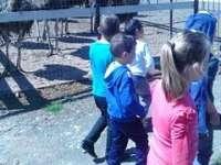 FOTO - Copiii de la CTF Ștefan cel Mare, în vizită la o fermă de struți din Călinești