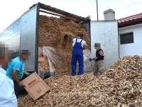 FOTO&VIDEO - 249.000 de pachete cu țigări de contrabandă, ascunse într-un automarfar care transporta rumeguș