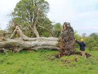 Furtuna din 17 septembrie a făcut pagube serioase în pădurile din Maramureș