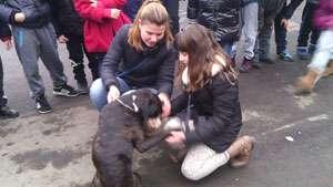 """GALERIE FOTO - """"Prietenii animalelor"""" i-au învățat pe copiii de la Școala """"George Coșbuc"""" cum să se comporte cu câinii"""