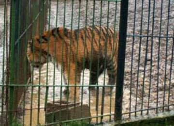 Grădina Zoologică din Baia Mare a fost închisă