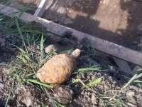 Grenadă din al Doilea Război Mondial, găsită de pompieri la Leordina