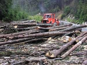 Guvernul a sesizat DNA în legătură cu 52 fapte penale în administrarea fondului forestier, inclusiv în Maramureș