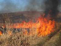 Hectare de vegetație au ars violent lângă o fermă din Săpânța
