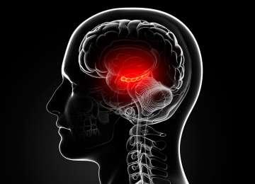 Hipocampul din creier joacă un rol esențial în limbaj și în asocierile din memorie