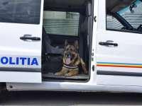 Hoț prins cu ajutorul câinelui polițist Ricky