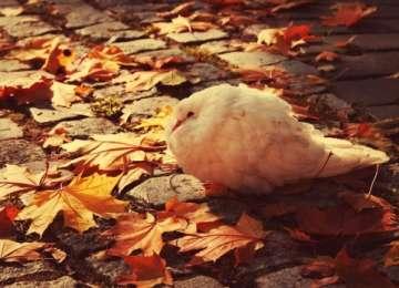 Iarna bate la uşă. Aflaţi cum va fi vremea în următoarele trei zile