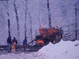 IARNĂ ÎN PASUL GUTÂI: Un copac s-a rupt sub greutatea zăpezii și a căzut pe carosabil