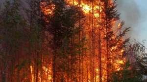 Incendiu: Intervenţie în forţă a pompierilor pentru a stinge un incendiu de pădure în Munţii Pietrosul Rodnei