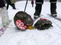 INEDIT: O broască ţestoasă a învins un iepure într-o cursă de schi