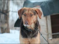 Ţinerea câinilor în lanţ, interzisă din 2008
