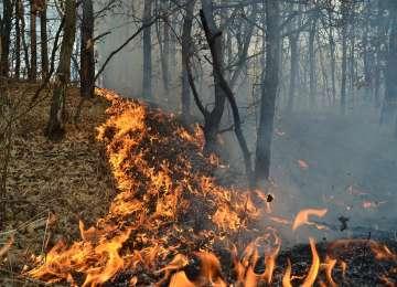 Intervenții ISU Maramureș pentru stingerea mai multor incendii de vegetație uscată