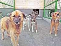Ionuț NU a fost omorât de maidanezi, ci de un câine de luptă