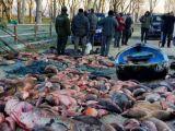 ITALIA – Trei români au șocat întreaga țară după ce au golit de peşte un lac situat într-o arie protejată