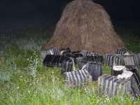ITPF Sighetu Marmației: Peste 8.000 pachete țigări confiscate de către polițiștii de frontieră