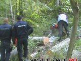 Jandarmi amenințați cu arma de hoții de lemne. Un minor din Borșa se află printre cei bănuiți