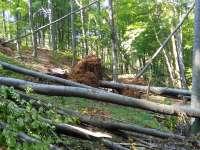 Județul Maramureș, pe primul loc în România în anul 2017 la tăieri ilegale de păduri
