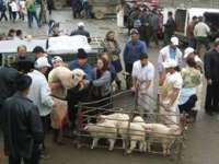 Jumătate din târgurile de animale din Maramureș nu sunt autorizate de către DSVSA