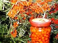 Leacuri din grădina noastră: Cătina - regina imunității sau