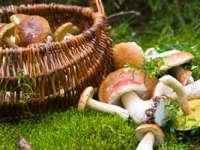 Leacuri din grădina noastră: Ciupercile