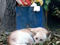 Legea EUTANASIERII câinilor, BLOCATĂ la CCR