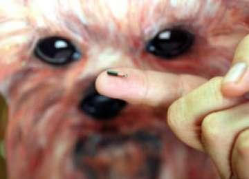 Legea microcipului pentru câinii cu stăpân a intrat în vigoare de la 1 ianuarie. Ce trebuie să ştiţi: reguli şi amenzi