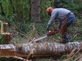 LEGI PENTRU HOȚI - Trei decenii de taiere ilegala a padurilor, cu sprijinul autoritatilor