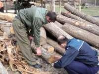 Lemn confiscat şi sancţiuni aplicate de polițiștii maramureșeni pentru contravenţii silvice