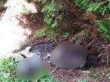 MACABRU: BORŞA - Cadavrul unui bărbat, găsit la marginea unei păduri
