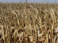 MADE ÎN ROMÂNIA - Liga Agricultorilor a depus plângere penală împotriva ANM pentru prognoze meteo greşite