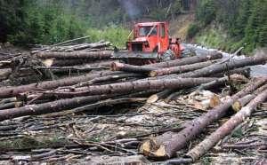 Mafia tăierilor ilegale de pădure din Borșa a ajuns din subiect la posturile TV naționale