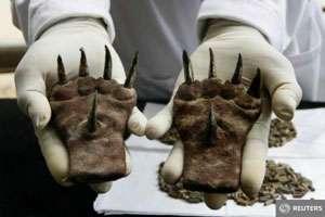 Mănuși cu gheare de metal, vechi de 1.500 de ani, descoperite în Peru