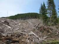 Mara-Runcu-Tătaru-Izvoare: Tăierile masive de pădure şterg orice speranţă de turism