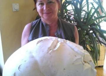 MARAMUREŞ: O femeie a găsit o CIUPERCĂ URIAŞĂ de aproape cinci kilograme