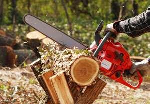 MARAMUREŞ: Un bărbat şi-a retezat piciorul cu drujba în timp ce tăia un copac dintr-o pădure