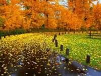 MARAMUREŞ: Vreme rece și ploi pe arii extinse din 8 octombrie