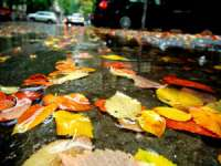 MARAMUREŞ: Vremea specifică toamnei îşi face simţită prezenţa în următoarele două săptămâni