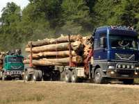 Maramureș, județul unde s-au înregistrat cele mai multe tăieri ilegale în 2016